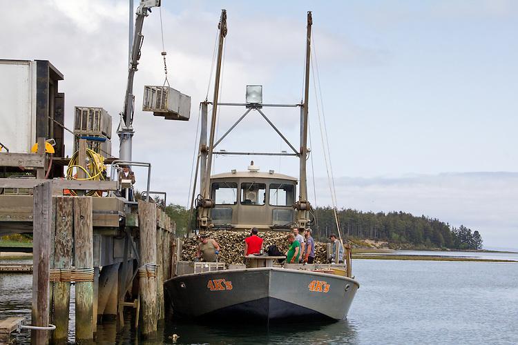 Washington Coast, Ocean Park, Nahcotta, oyster scow, commercial oyster farming, Willapa Bay, Pacific County, Southwest Washington, Washington State, Pacific Northwest, USA,