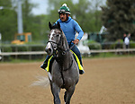 April 26, 2019 : Tacitus works out at Churchill Downs, Louisville, Kentucky, preparing for a start in the Kentucky Derby. Owner Juddmonte Farms LLC, trainer William I. Mott. By Tapit x Close Hatches (First Defence)  Mary M. Meek/ESW/CSM