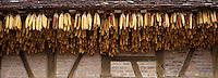 Europe/France/Bourgogne/71 Saône-et-Loire: env de Louhans: Ferme et mas séchant pour l'élevage des poulets de Bresse AOC