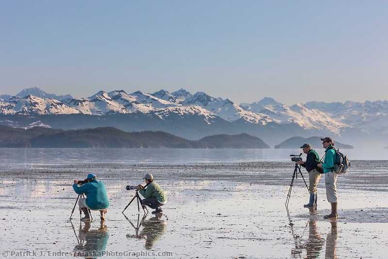 Photographers and birders glass for shorebirds along the beaches of Hartney Bay, Copper River Delta, Prince William Sound, Alaska, during the annual shorebird migration.
