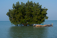 Africa, Madagascar, Ankilibe. Near the Tropic of Capricorn on the Mozambique channel. Tree in the water.