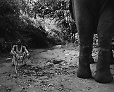 SRI LANKA, Asia, low section of an elephant with trainer sitting near by at Dambulla (B&W)