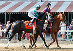 Warriors Club in the post parade as Whitmore (no. 3) wins the Forego Stakes (Grade 1), Aug. 25, 2018 at the Saratoga Race Course, Saratoga Springs, NY.  Ridden by  Ricardo Santana, Jr., and trained by Ron Moquett, Whitmore finished 1 1/2 lengths in front of City of Light (No. 8).  (Bruce Dudek/Eclipse Sportswire)