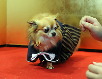 Pet dogs wearing kimonos have their photographs taken at the Osaka Pet Expo and fashion show, Osaka, Japan.<br /> 25-Sep-11<br /> <br /> Photo by Richard Jones
