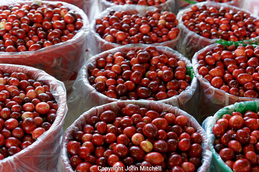Containers of fresh cranberries at the the Jean Talon Market, Montreal, Quebec, Canada