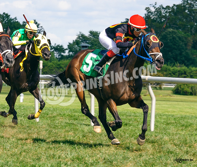 Lil' Smartiepants winning at Delaware Park on 9/3/16