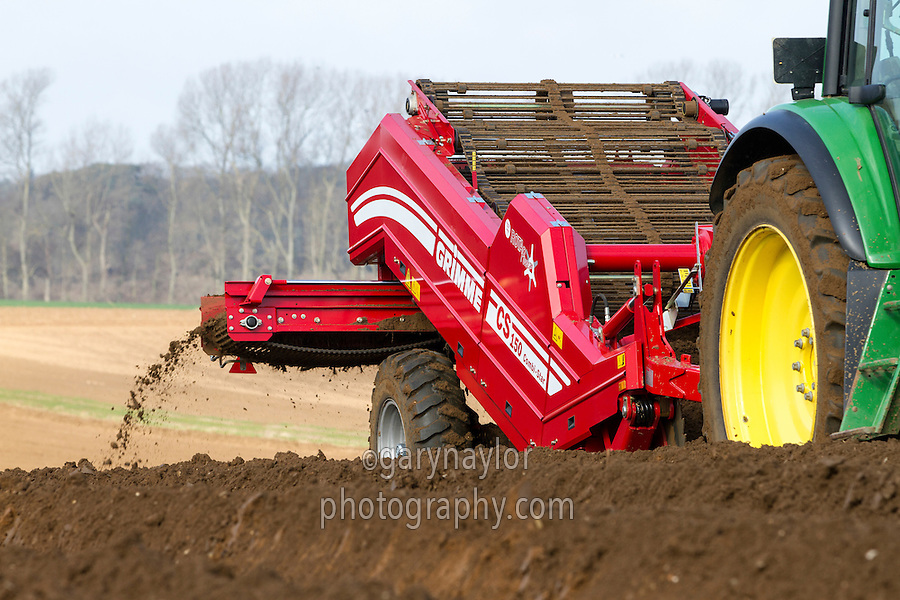 Destoning and planting main crop potatoes in Suffolk