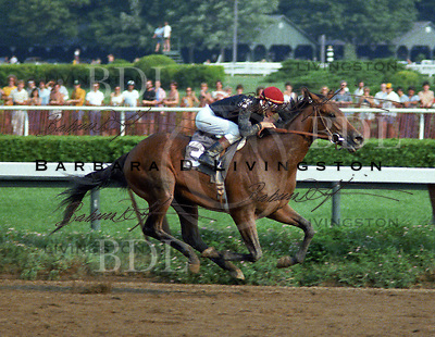 Private Account (Damascus - Numbered Account), top racehorse and sire for the Phipps Stable, wins the 1979 Jim Dandy.