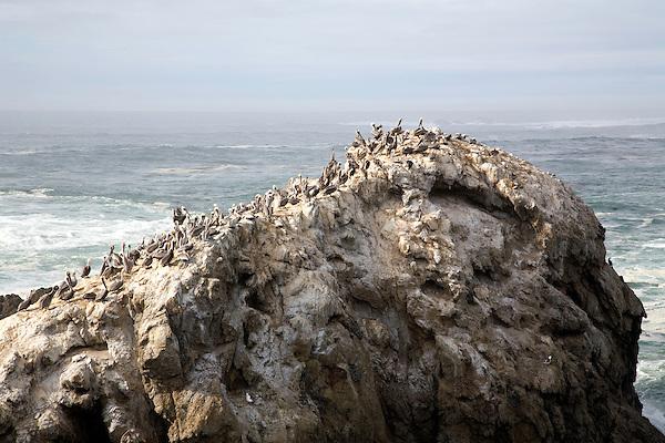 Bird Island, Point Lobos, 2007.