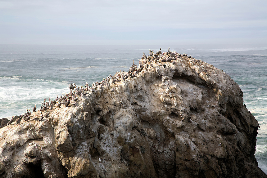 Bird Island, Point Lobos, 2007.