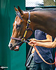Songbird at Delaware Park on 7/13/17 <br /> schooling in the paddock