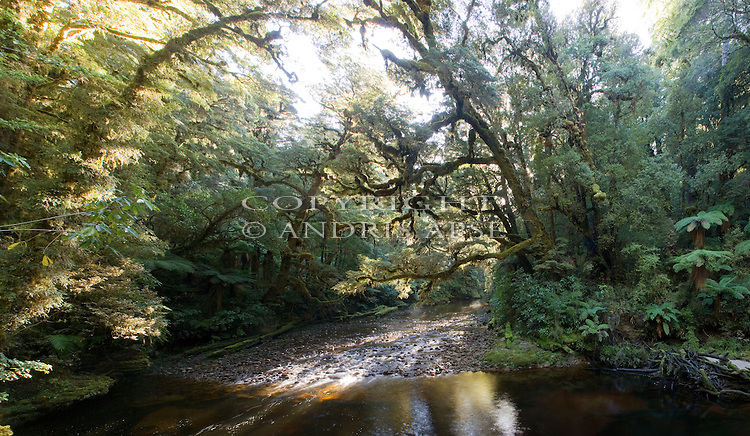 Oparara River, Kahurangi National Park. New Zealand