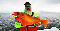 BNPS.co.uk (01202 558833)<br /> Pic: DaveWoodBrignall/BNPS<br /> <br /> Dave with his mighty catch. <br /> <br /> A British angler struck gold when he caught a record rose fish.<br /> <br /> The unusual specimen, that looks more like giant gold fish, was caught by Dave Wood-Brignall during a sea fishing trip to Bodo, Norway.<br /> <br /> It weighed 4lbs 10ozs, making it a European record for the vivid specimen that is also known as an Atlantic redfish.