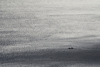 Lone fishing boat traveling on the Vestfjord near Stamsund, Lofoten Islands, Norway