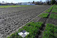 GERMANY, Halle, Martin-Luther University, department agriculture research, grain experimental farming and seed research, wheat experimental fields, marking point for drone