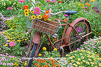 63821-22119 Old bicycle with flower basket in garden with zinnias,  Marion Co., IL