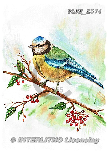 Kris, REALISTIC ANIMALS, REALISTISCHE TIERE, ANIMALES REALISTICOS, paintings+++++,PLKKE574,#a#, EVERYDAY ,birds