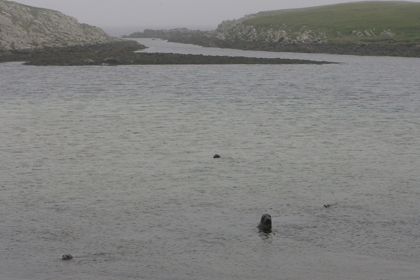 Seals are the only inhabitants of Mousa island in the Shetlands.
