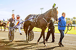 OCTOBER 12, 2019 : From Italy, Zacon Gio driven by Roberto Veccione , wins the $1,000,000 International Trot at 1 1/4 mile, at Yonkers Raceway, on October 12, 2019 in Yonkers, NY.  Sue Kawczynski _ESW_CSM