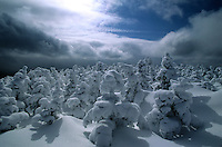 Stunted trees are blanketed in thick snows atop the White Mountains of New Hampshire.