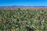 Morocco, Souss-Massa-Draa, Nekob: View over oasis palm grove | Marokko, Souss-Massa-Draa, Nekob: Palmenhain Oase