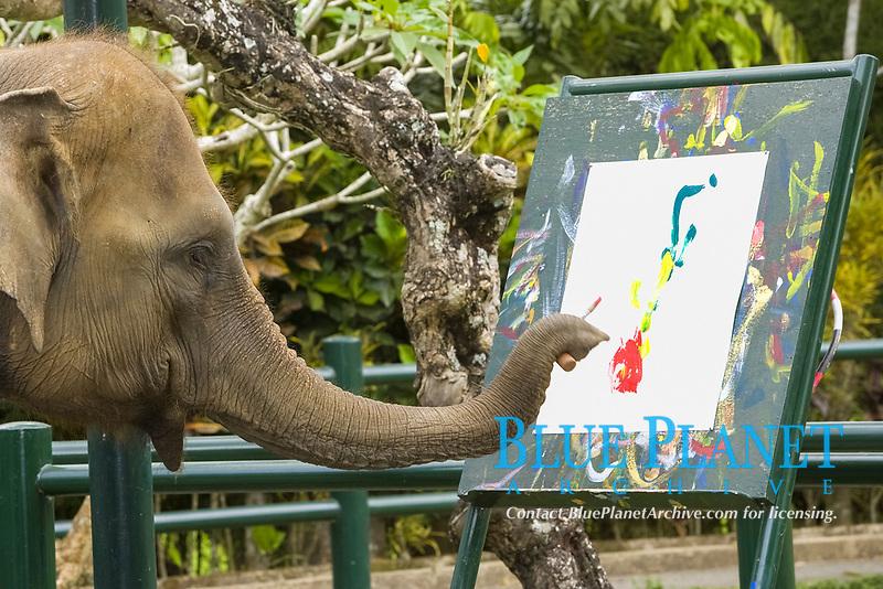 Asian elephant or Asiatic elephant, Elephas maximus, painting, Bali Elephant Safari Park, Desa Taro forest, Ubud, Bali Island, Indonesia, Pacific Ocean