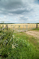 Locked farm gate at entrance of wheat field - Norfolk, July