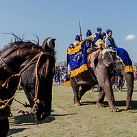 ANANDPUR SAHIB, INDIA - March 06, 2015: Nihangs, or &quot;Sikh warriors&quot; arrive on an elephant, to a field where other Nihang Sikh 'warriors' will perform Gatka (mock encounters with real weapons), tent pegging and bareback horse-riding during Hola Mohalla celebrations on March 06, 2015 in Anandpur Sahib, India. Hola Mahalla or simply Hola is a Sikh event, which takes place on the first of the lunar month of Chet, which usually falls in March, and sometimes coincides with the Sikh New Year. It was started by Guru Gobind Singh the tenth Sikh guru in 1701 AD. Hola Mohalla is a three day Sikh festival, in which Nihang Sikh 'warriors' perform Gatka (mock encounters with real weapons), tent pegging and bareback horse-riding, which usually falls in March coinciding with or following the Hindu festival of Holi. <br /> Daniel Berehulak for The New York Times