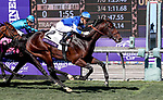 November 1, 2019: Connections for Structor, winner of the Juvenile Turf, on Breeders' Cup World Championship Friday at Santa Anita Park on November 1, 2019: in Arcadia, California. Bill Denver/Eclipse Sportswire/CSM