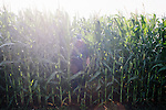 David Brandt emerges from his corn field with his dog, Yankee, and a soil sample on his 1,200-acre farm in central Ohio. Brandt grows corn, soy, wheat and hay on his farm that he runs with his wife, Kendra, in Carroll, Ohio. He has been practicing no-till farming since 1971, and has planted cover crops, such as winter peas, cabbage, clover and millet, which return nutrients to the soil, since 1978. His return to these traditional farming practices have allowed Brandt to drastically reduce his usage of fertilizers and pesticides, has increased the soil fertility and strengthened the land's tolerance to drought and excessive rain.