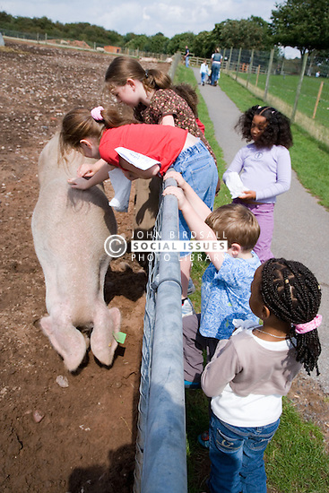 Children looking at a pig on a children's outing to a working farm,