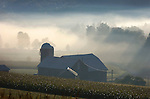 Foggy morning barn in Rose Valley, Lycoming County, PA.
