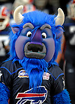 28 August 2008:  Buffalo Bills' mascot Billy Buffalo arrives onfield prior to a game against the Detroit Lions at Ralph Wilson Stadium in Orchard Park, NY. The Lions defeated the Bills 14-6 in their fourth and final pre-season game...Mandatory Photo Credit: Ed Wolfstein Photo