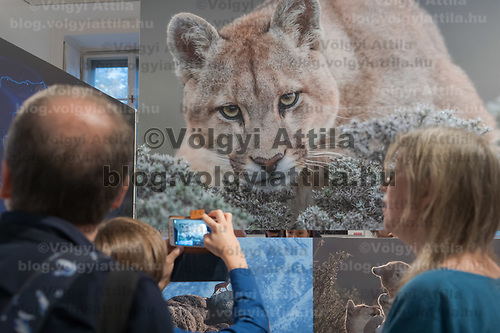 Viewers watch photos on display at the World Press Photo exhibition in Budapest, Hungary on Sept. 18, 2019. ATTILA VOLGYI