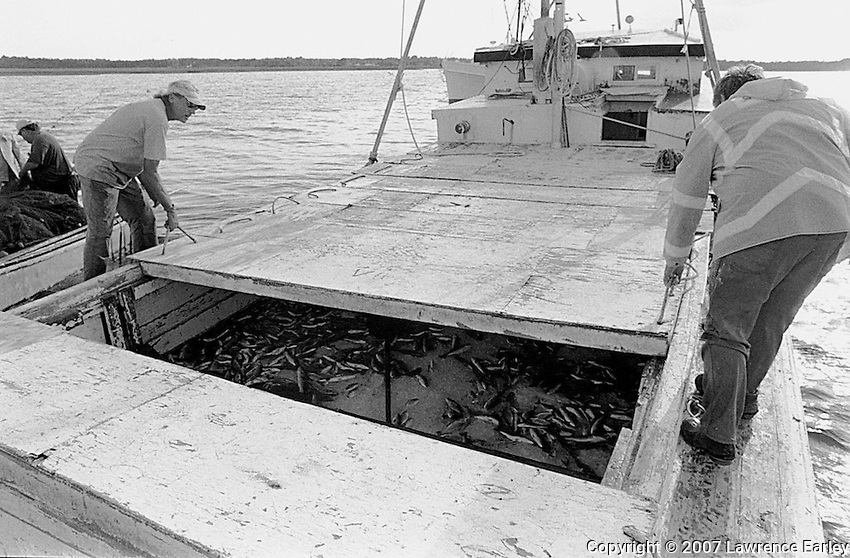 When the fish are transferred from the long-haul fisherman's nets to the runboat's hold, the hatches are replaced. The runboat returns to the fish house where the fish are sorted, boxed and shipped.