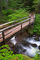 Bridge over Laughingwater Creek in old growth forest, Silver Falls Trail, Mount Rainier National Park, Lewis County, Washington, USA