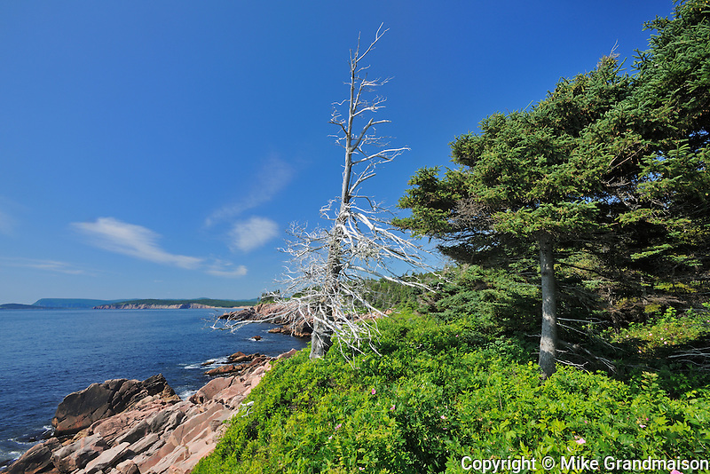 Shoreline along the Cabot Strait on the Cabot Trail at Lackies Cove<br /> Cape Breton Highlands National Park<br /> Nova Scotia<br /> Canada