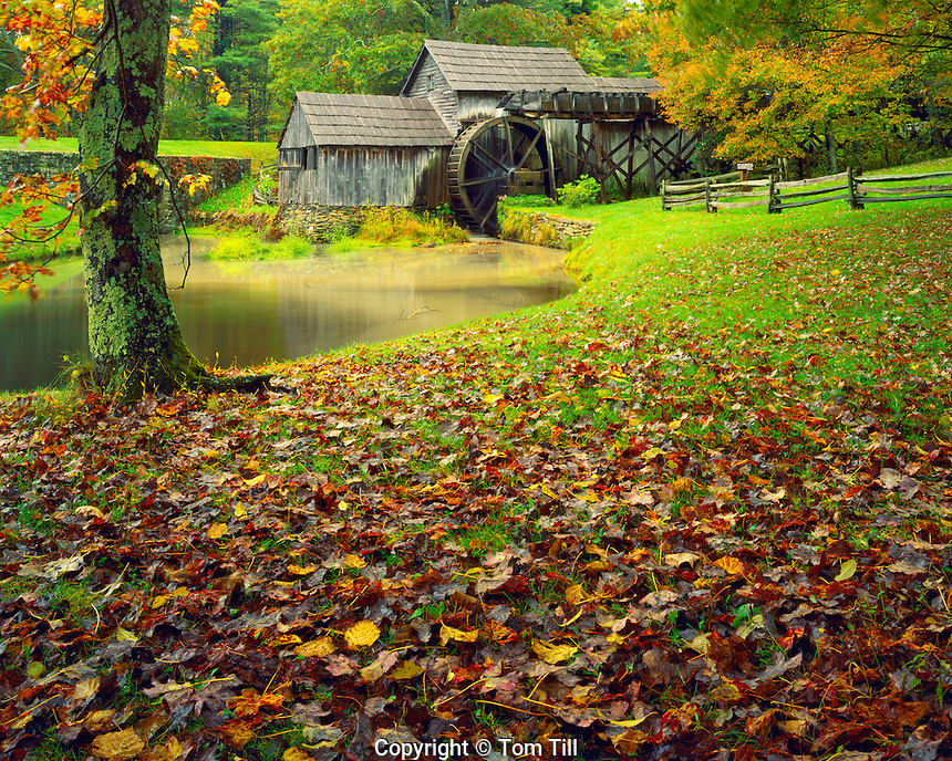 Mabry Mill in Fall, Operated from 1910, Blue Ridge Parkway, Appalachian Mountains, Virginia