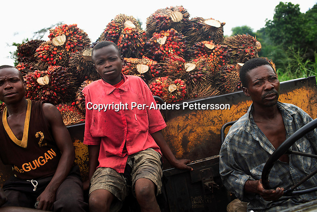 LUKUTU, DEMOCRATIC REPUBLIC OF CONGO MARCH 17: Unidentified men rides in an old truck with a load of palm tree fruit on March 17, 2006 outside Lukutu, Congo, DRC. Lukutu, a small village along the Congo River about 1500 kilometers from Kinshasa, the capital, is a big producer of palm oil, which is used for cooking. The Belgians built the factory in 1911 and it was closed during the recent civil war. About 10,000 people are dependent on the factory, the only one in the area. Congo River is a lifeline for millions of people, who depend on it for transport and trade. During the Mobuto era, big boats run by the state company ONATRA dominated the traffic on the river. These boats had cabins and restaurants etc. All the boats are now private and are mainly barges that transport goods. The crews sell tickets to passengers who travel in very bad conditions, mixing passengers with animals, goods and only about two toilets for five hundred passengers. The conditions on the boats often resemble conditions in a refugee camp. Congo is planning to hold general elections by July 2006, the first democratic elections in forty years..(Photo by Per-Anders Pettersson/Getty Images)..