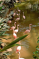 Pink flamingos at the Minnesota Zoo.  Apple Valley Minnesota USA