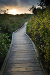 Wooden Boardwalk path walking trail through Elfin Forest Natural Area at sunset, Los Osos, California