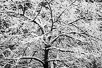 Heavy wet snow sticks to the branches of trees in the Chelsea neighborhood of New York on Friday, March 10, 2017. A winter weather advisory is in effect with New York City forecast to get between 3 and 5 inches of snow. The advisory is in effect until 2PM. (© Richard B. Levine)