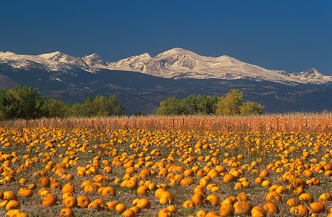 Autumn, Pumpkins, Mt. Audubon, Boulder County, Colorado