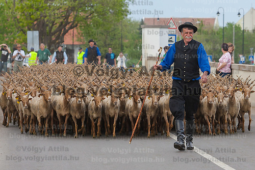 A traditional Hungarian shepherd walks in front of his flock of Racka sheeps in the Great Hungarian Plain (Puszta) in Hortobagy, 200 km (124 miles) east of Budapest, April 30, 2011. Every spring around St. George's Day, Hortobagy celebrates the beginning of the new grazing season. ATTILA VOLGYI