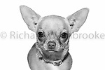 Partners Pets Portrait Shoot 23rd November 2014