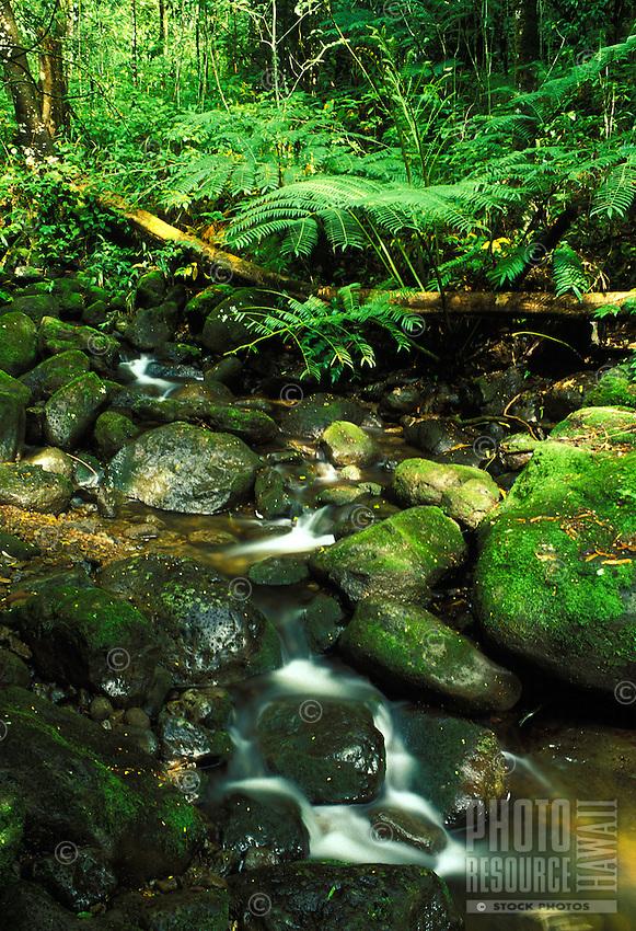 A tranquil stream awaits hikers along the trail to Manoa falls, Oahu.
