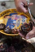 Europe/France/Provence-Alpes-Côte d'Azur/13/Bouches-du-Rhône/Marseille: Préparatifs du repas au cabanon d' Yves Darnaud, cabanonier à la Calanque de Sormiou - ouverture des oursins