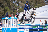 AUS-Sarah Clark rides Aremdale Donn Piatt during the CCI2* Showjumping. 2017 AUS-Mitsubishi Motors Australian International 3 Day Event. Victoria Park, Adelaide. Sunday 19 November. Copyright Photo: Libby Law Photography