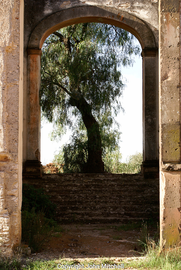 Tree framed by ruins in the 19th century mining town of Mineral de Pozos, Guanajuato, Mexico.