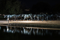 We like the way these bronze statues of longhorns and trail riders  reflected back at the Pioneer Plaza Park in downtown Dallas and gave a realistic look.